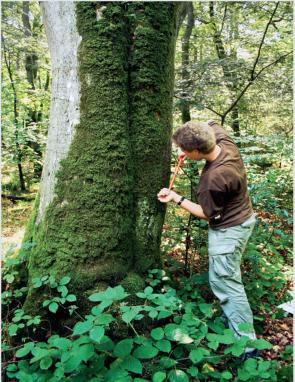 I dag skal vi tale om naturen. Jeg elsker at tage mig af naturen ved at samle skrald, plante buske og træer, ikke overforbruge. Så i dag skal vi tale om skovrejsning